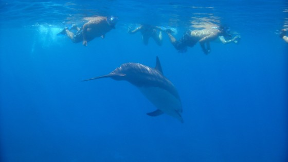Dolphin and Reef Adventure 3