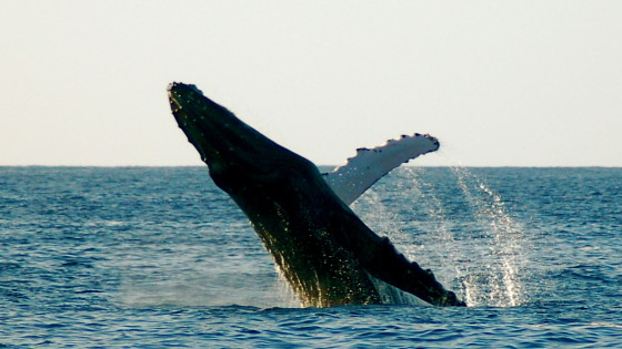 Whale Watching 2